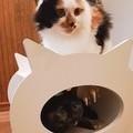 猫ハウス その2
